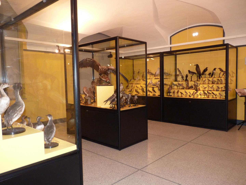 La sala zoologica